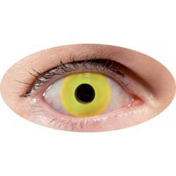 lentilles oeil jaune-annuel