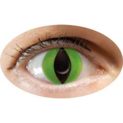 lentilles oeil chat vert annuel