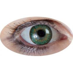 lentilles iris vert annuel