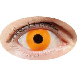 lentilles orange